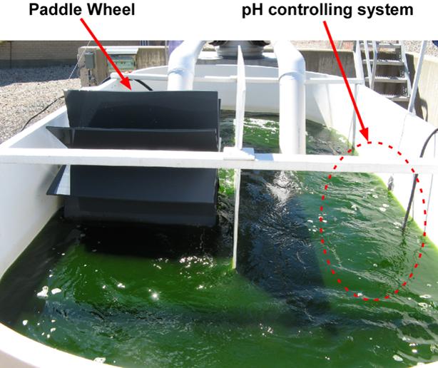 Pilot-scale microalgae cultivation