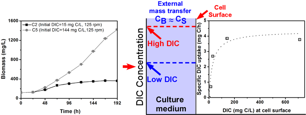 Effects of dissolved inorganic carbon on autotrophic algal growth